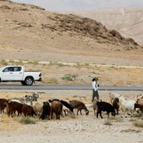 Plus de 90 % des ordonnances d'expulsion de Cisjordanie concernent des Palestiniens, indique un rapport récent