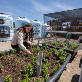 Le jardinage domestique sème les graines de l'autosuffisance palestinienne